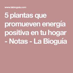 5 plantas que promueven energía positiva en tu hogar - Notas - La Bioguía