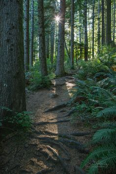Ripple Rock Trail, Campbell River, BC by Lisa Bettany Forest Trail, Forest River, Places To Travel, Places To Visit, Nature Posters, Mountain Hiking, Best Hikes, Vancouver Island, Canada Travel