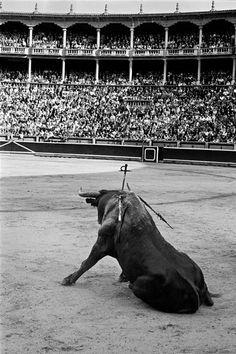 Pamplona, 1960. Masats tomó esta impresionante imagen en la plaza de toros de la capital navarra. El toro con la espada clavada espera la muerte en una pose que no parece la de un animal a punto de morir.