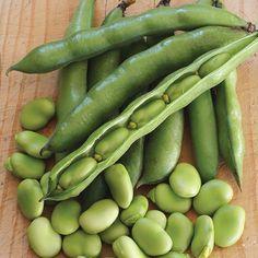 Broad Bean Robin Hood Seeds