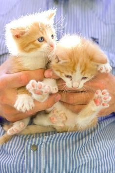 a handful of kittens Kittens And Puppies, Cute Cats And Kittens, I Love Cats, Crazy Cats, Kittens Cutest, Baby Animals, Cute Animals, Sleepy, Son Chat