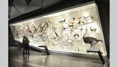 MUSÉE DES CONFLUENCES - ESPÈCES, LA MAILLE DU VIVANT - Goppion Museum Reportage