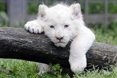 Can i be any cuter..