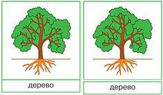 Карточки Строение дерева