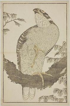 "Katsushika Hokusai (1760-1849) - Hawk, from ""The Picture Book of Realistic Paintings of Hokusai"", 1814"