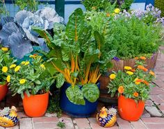 15-veggies-perfect-for-container-gardening9