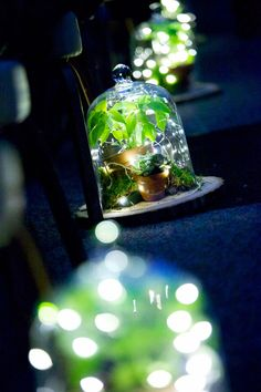 Succulents, potted plants, moss and fairy lights under cloches lining the ceremony aisle.