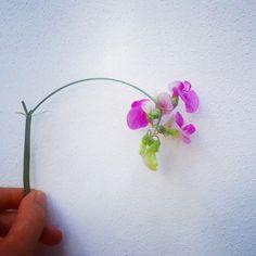 Lovely sweet peas #flowers.