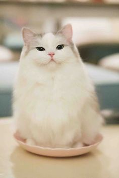 Cats Wallpapers ✧ Cute Cats And Kittens, Baby Cats, Cool Cats, Kittens Cutest, Pretty Cats, Beautiful Cats, Animals Beautiful, Pretty Kitty, Beautiful Pictures