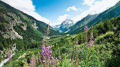 Windgällen, Ruchen und Schärhorn, Düssi, Oberalpstock und Bristen – der Kranz der Dreitausender rund um das Maderanertal erscheint gewaltig. Mächtige Tröge als Zeugen der Eiszeiten, Steilflanken, über die zahlreiche Wasserfälle stieben, aber auch malerische Geländeterrassen, die der Mensch seit Jahrhunderten als Sommerweiden für sein Vieh nutzt. Wild schäumt der Chärstelenbach durch die Talsohle, gespeist vom Hüfifirn, der als größter Gletscher der Zentralschweiz einen Hauch von Arktis…
