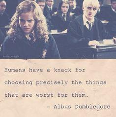 Dumbledore shipped them!