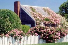 Rose grown house