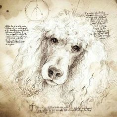Buy Poodle art and accessories. Buy Poodle home accessories and pillows. Buy unique Da Vinci style Poodle drawings with hand-written notes and interesting facts I Love Dogs, Cute Dogs, Poodle Drawing, Dog Memorial Tattoos, Dog Suit, Dog Hotel, Dog Paintings, Dog Portraits, Illustrations