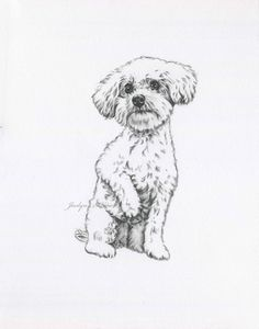May 2020 - Bijon Kunst Bijon Zeichnung Originalzeichnung Bijon Skizze Animal Sketches, Animal Drawings, Drawing Sketches, Art Drawings, Sketches Of Dogs, Drawings Of Dogs, Contour Drawings, Drawing Faces, Drawing Tips