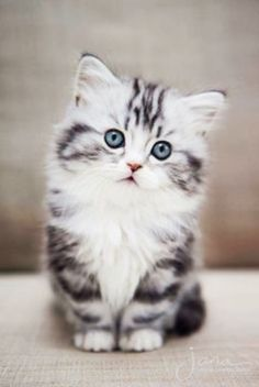 what an adorable little kitten - such beautiful eyes and colouring ~ couldn't you just cuddle this little guy/girl