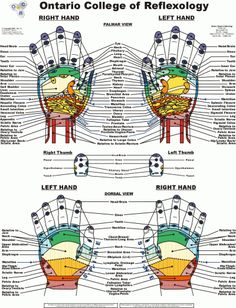 Free Printable Reflexology Charts | body healing zones orjun chart free download for those chart foot hand ...