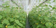 Cần Thơ mời đầu tư dự án nông nghiệp công nghệ cao Tại cuộc gặp gỡ với hơn 150 doanh nghiệp Hàn Quốc và doanh nghiệp tại ĐBSCL ngày 29-4, UBND TP Cần Thơ đã mời gọi doanh nghiệp đầu tư nhiều dự án nông nghiệp công nghệ cao tại TP.