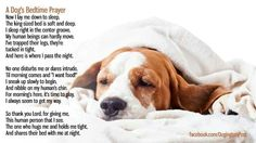 Dog's bedtime prayer. So true! When we had a queen-sized bed, Magellan slept curled in the corner, but now that we have the cal king, he sleeps in the middle all stretched out.
