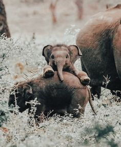 Cute Wild Animals, Baby Animals Pictures, Super Cute Animals, Cute Little Animals, Cute Animal Pictures, Cute Funny Animals, Animals Beautiful, Animals And Pets, Cute Baby Dogs