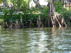 Image of Crystal River, FL