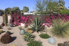 Crea un jardín que no necesita muchos riegos o cuidados: Jardín con suculentas, cactus y bougainvilleas