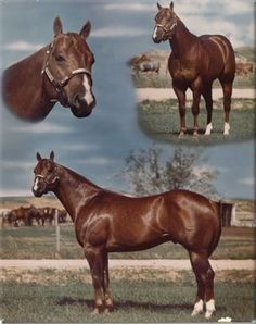 Watch Joe Jack by Two Eyed Jack, my mare's sire.