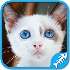 Cute kittens games: Puzzles and sounds in this awesome kitty cat games app Cat Game App, Cat App, Kittens Cutest, Cats And Kittens, Cute Cats, Cat Voice, Free Puppies, Free Games For Kids, Japanese Cat