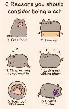Le migliori marche per il cibo e i prodotti per gatti, molte in offerta: http://www.pacopetshop.it/Gatti/12/33065/