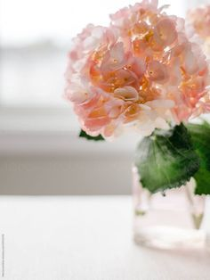 Hydrangea Flower, Flowers, Hydrangeas, Bottles And Jars, Petunias, Geraniums, Perennials, Flower Arrangements, Glass Vase