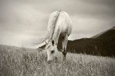 Horse Photograph in Black and White Peaceful Day by ApplesAndOats, $25.00