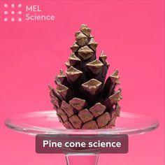 Amazing Science Experiments, Science Experiments For Preschoolers, Science Projects For Kids, Fun Activities For Kids, Science For Kids, Stem Science, Preschool Science, Kindergarten Crafts, Ideas Geniales
