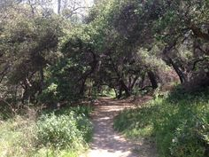 Arroyo Seco - Gabrielino Trail, a favorite place to walk with the kids when we lived in LA. Stevenson Ranch, Santa Paula, Santa Clarita, Living In La, Married Life, Valencia, Walks, Places Ive Been, Trail