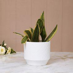 MADISON-MACKENZIE Textured Round Planter   White   Ceramic Blush And Grey Living Room, Ceramic Design, Indoor Plants, White Ceramics, Living Spaces, Planter Pots, Texture, Decor, Inside Plants