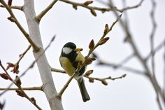 Animal Kingdom, Wordpress, Birds, Contemporary, Blog, Animals, Animales, Animaux, Bird