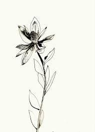 Image result for protea illustration