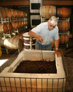 Tiger Mountain Vineyards owned and operated by John and Martha Ezzard (ABJ '60) & John and Marilyn McMullan