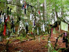 Clootie Wells: Where the trees are weighed down in rotting rags