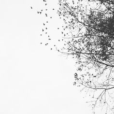 Just watched at least birds leave the trees at my house. The most breathtaking thing I've ever seen. Picsart Png, Cute Wallpapers, Wallpaper Backgrounds, Art Girl, Landscape Paintings, Anime Art, At Least, Scenery, Illustration Art