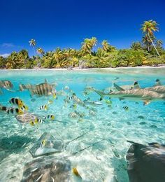 An image of fish in the water by a tropical island royalty-free stock photo Insane Pools, Travel Around The World, Around The Worlds, Scuba Travel, Image Of Fish, Underwater Images, Coral Garden, Lets Run Away, Reef Shark