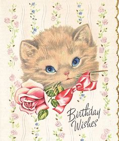Kitten with rose birthday card