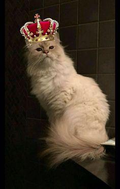 Ursino the king