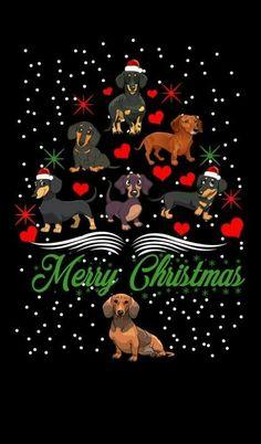 Celebrating a Merry Christmas Christmas Animals, Christmas Dog, Vintage Christmas, Christmas Cards, Mini Dachshund, Dachshund Puppies, Daschund, Dog Wallpaper, Weenie Dogs