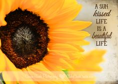 Connie Hanks Photography // ClickyChickCreates.com // sunflower and quote, with Kim Klassen textures