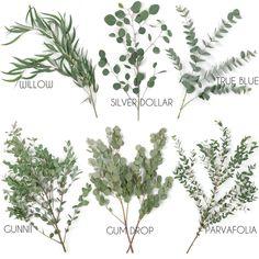 Top 5 Sage Green Eucalyptus