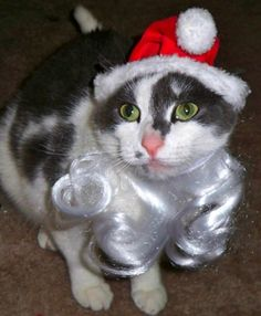 """If I am Santa, this is not how to get on my """"nice"""" list!"""