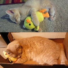 18 months later and he still sleeps with his duck buddy... Fascinating Pictures (@Fascinatingpics) | Twitter