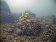 Itämeri, UNDER YTAN - PINNAN ALLA, kort version / lyhyt versio Baltic Sea, Geography, Still Life, Underwater, Science, Mountains, Nature, Travel, Viajes