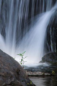 大阪 万博公園 滝