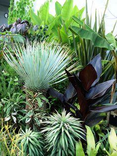 え~、今回は、乙庭店頭植栽から、ユッカ ロストラータ Yucca rostrata とその周辺の様子をば ^^(写真:すべて20150905撮影)まず、ち...