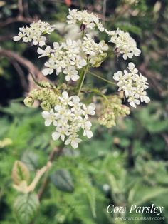 Whispering Trees and Forget-Me-Not Skies: Finding Wildflowers in April | Wild Library Irish Landscape, Chestnut Horse, Aspen Trees, Forget Me Not, Growing Tree, New Perspective, Finding Joy, Wildflowers, Spring Time